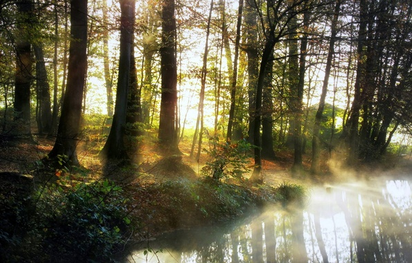 Picture forest, nature, fog, river, morning