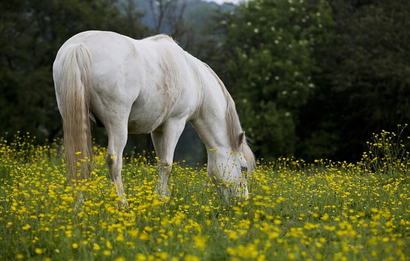 Picture field, summer, nature, horse