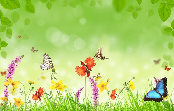 Picture butterfly, flowers, weed, leaves