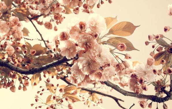 Picture summer, leaves, flowers, branches, nature, petals, flowering, vintage, nature, vintage