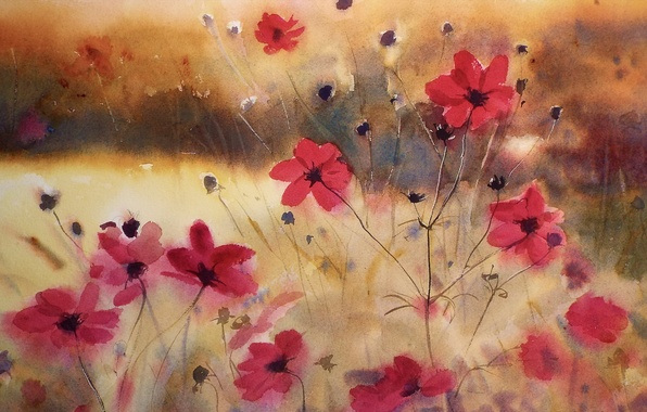 Picture flowers, cosmos, watercolor