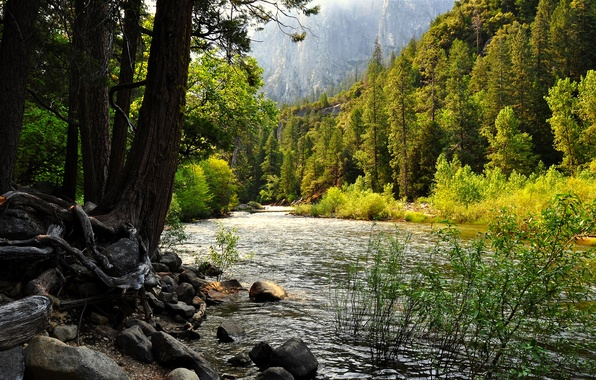 Photo wallpaper mountains, trees, rocks, stones., river, forest