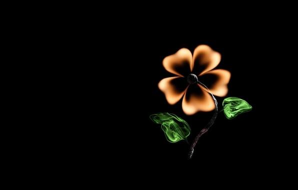 Picture flower, creative, fire, minimalism, match, black background