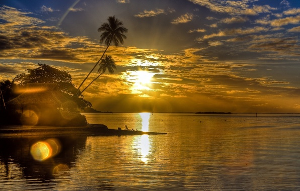 Picture sea, the sun, clouds, landscape, sunset, glare, palm trees, shore, the evening, Bungalow