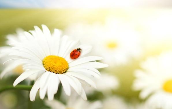 Picture animals, white, macro, flowers, red, nature, animals, predators ))