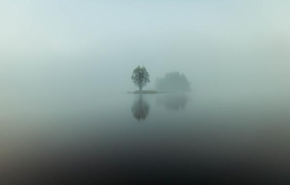 Picture water, reflection, fog, lake, tree, island, minimalism, morning, haze