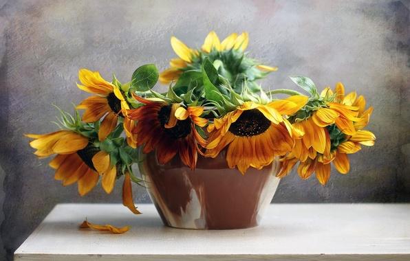 Picture flower, nature, life, flowers, bouquet, sunflowers, still