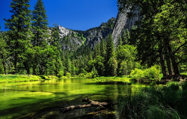 Picture trees, mountains, river, CA, Yosemite, California, Yosemite National Park, Sierra Nevada, the Merced river, Sierra …