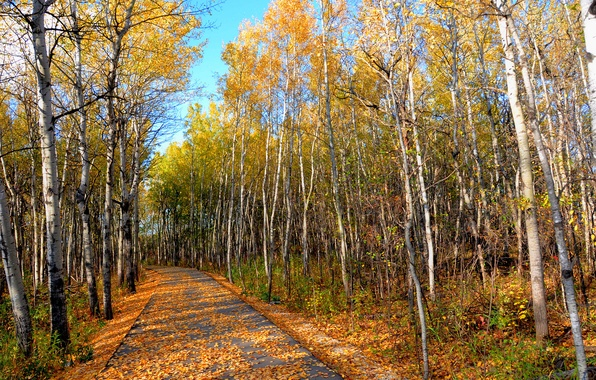 Picture road, autumn, forest, the sky, leaves, trees, Park, grove