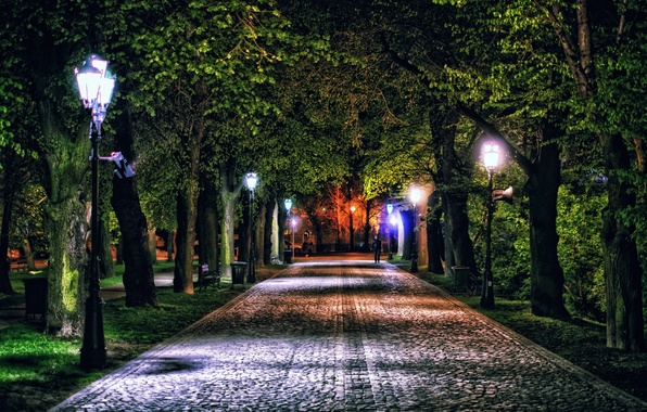 Picture trees, night, lights, Park, Poland, lights, track, alley, Rzeszow