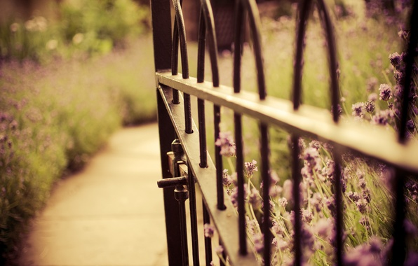 Picture flowers, nature, the fence, gate, blur, wicket, lavender