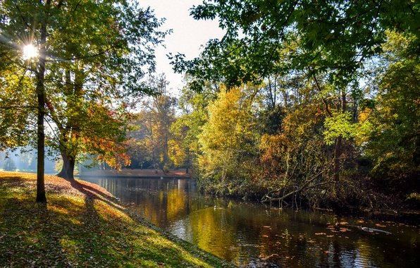 Picture autumn, leaves, the sun, trees, pond, Park, Netherlands, Vught, Reeburgpark