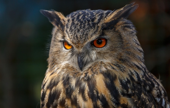 Picture eyes, background, owl