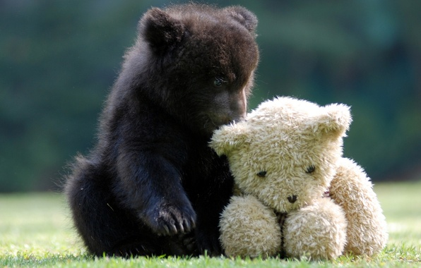 Picture toy, bear, Teddy bear