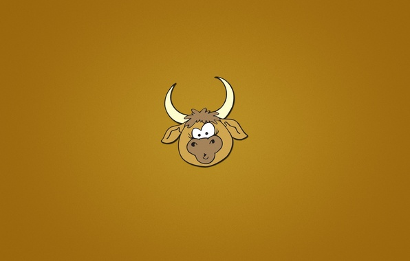 Picture face, animal, minimalism, head, horns, orange background, bull, bull
