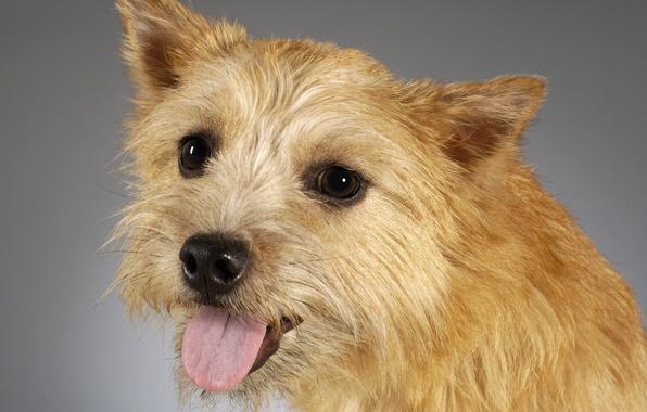 Picture face, portrait, dog