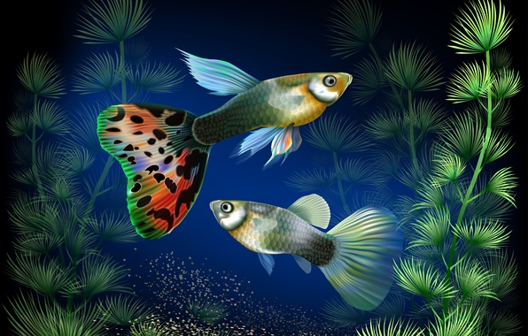 Picture fish, algae, aquarium, vector, under water