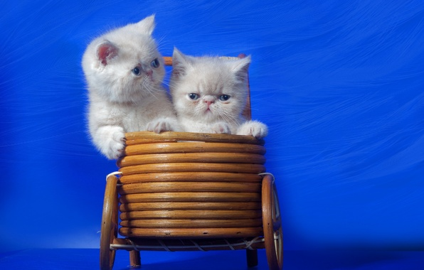 Picture cats, background, basket