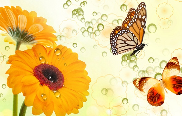 Picture flowers, collage, butterfly, vector, postcard