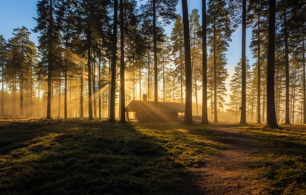 Picture forest, house, morning