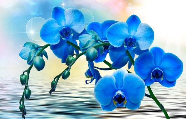 Picture water, flowers, glare, background, blue, Orchids