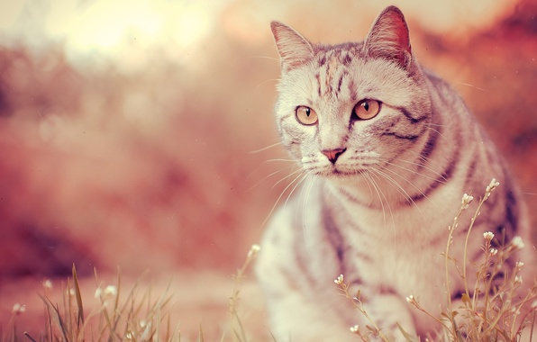 Picture eyes, cat, mustache, photo, paws, wool, blur, nose, muzzle, color, wallpapers, bokeh, bokeh