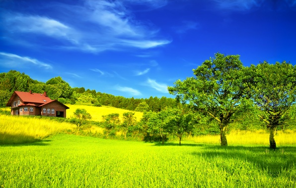 Picture field, summer, the sky, clouds, trees, house, house, the bushes, sky, trees, field, clouds, Summer
