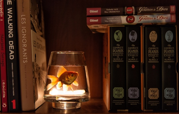 Picture water, glass, books, fish, wardrobe