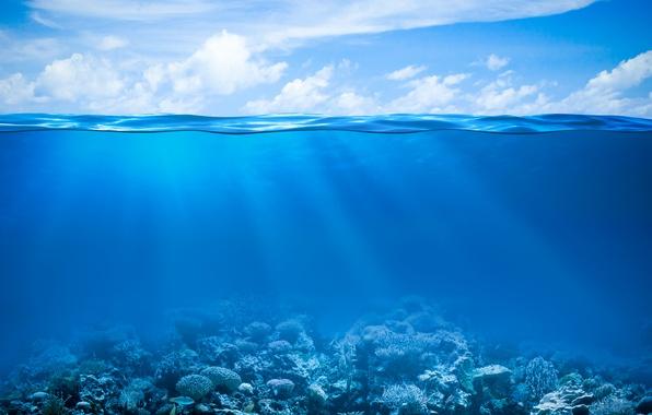 Picture sea, the ocean, underwater world, underwater, ocean, fishes, tropical, reef, coral, coral reef