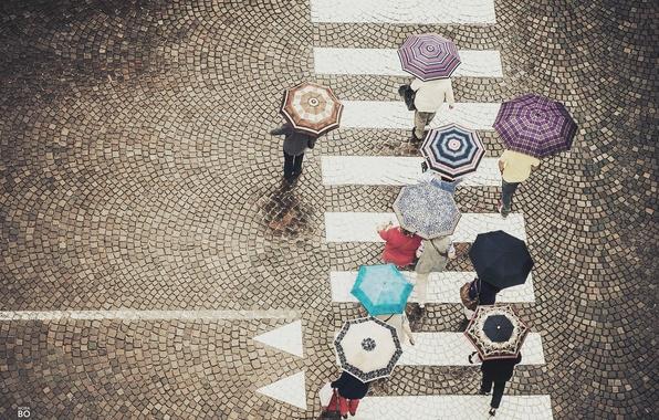 Picture people, street, umbrellas, street, people, walking, umbrellas, crosswalk, walking, crosswalk