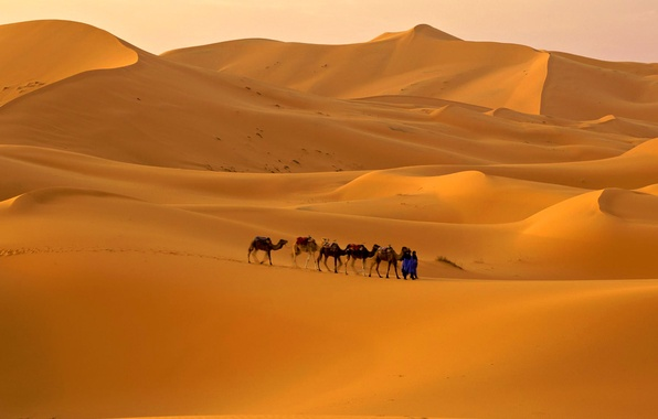 Picture sand, the sky, desert, barkhan, camel, caravan