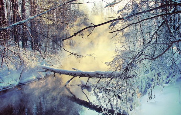 Picture winter, snow, branches, lake, couples