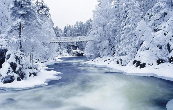 Picture winter, frost, snow, trees, bridge, river