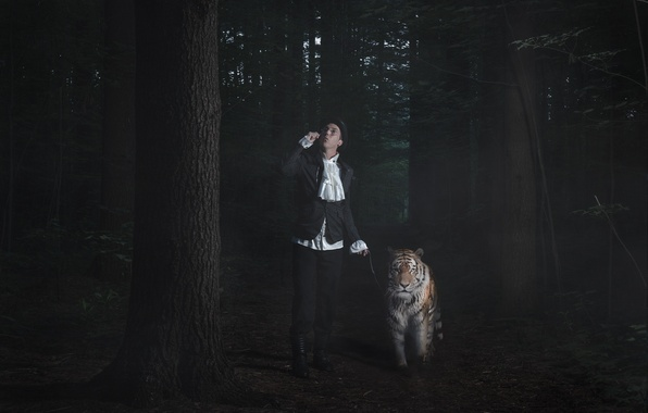Picture tiger, people, walk