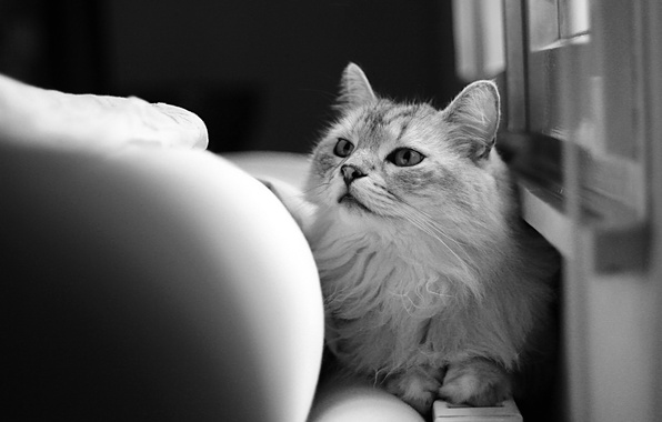 Picture cat, cat, wool, black and white, looks