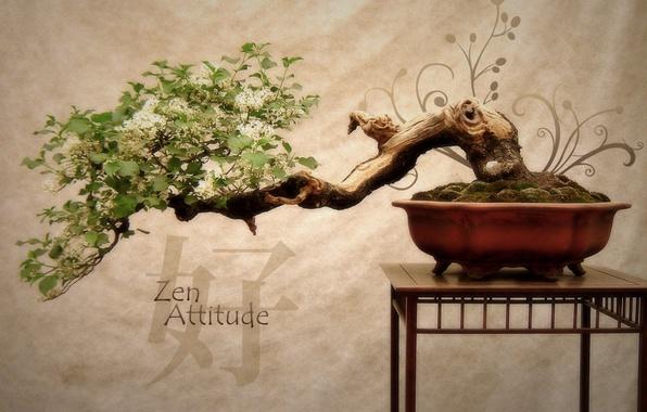 Picture flowers, tree, Japan, bonsai