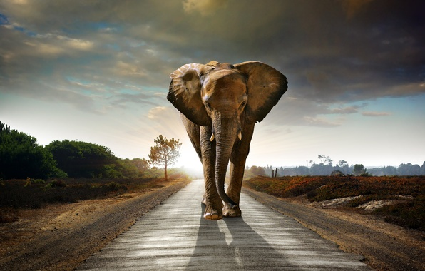 Picture road, the sky, clouds, elephant, the bushes