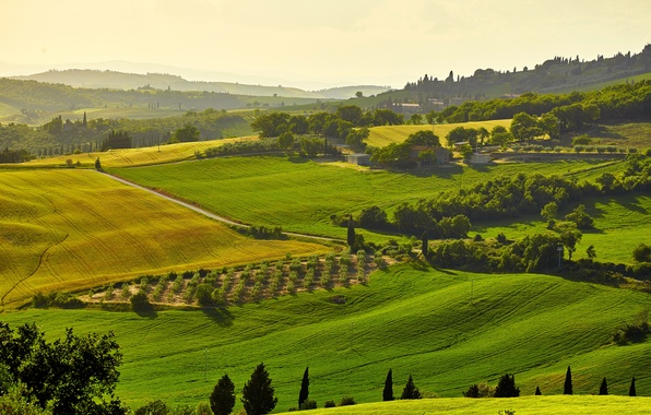 Picture the sun, trees, field, Italy, houses, meadows, Tuscany