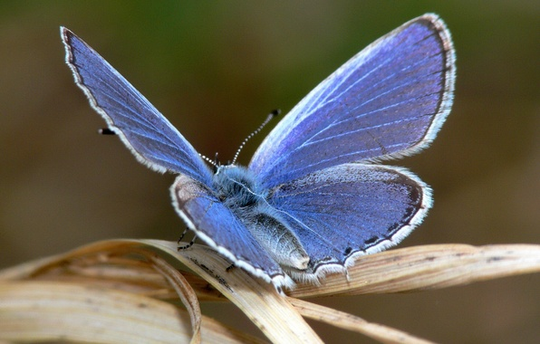 Picture blue, sheet, Butterfly