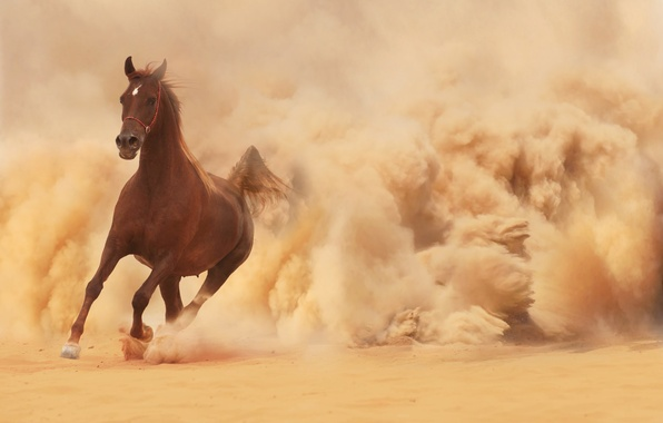 Picture sand, horse, horse, dust, running, runs