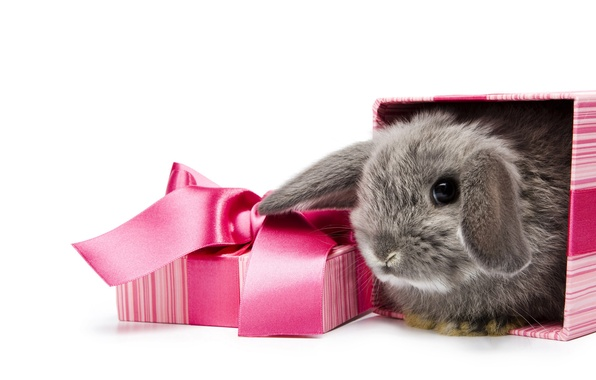 Picture white, background, box, gift, rabbit