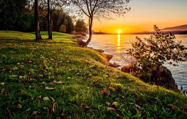 Picture the sky, grass, sunset, nature, lake, tree, shore, Nature, Sky, Tree, Water, Sunset, Lake, Boda