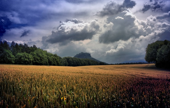 Picture wheat, greens, field, grass, clouds, trees, landscape, clouds, nature, green, plants, valley, ears, grass, sky, …