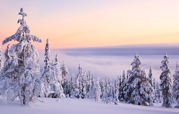Picture winter, clouds, snow, mountains, nature, silence, tree, frost, day, white, fluffy