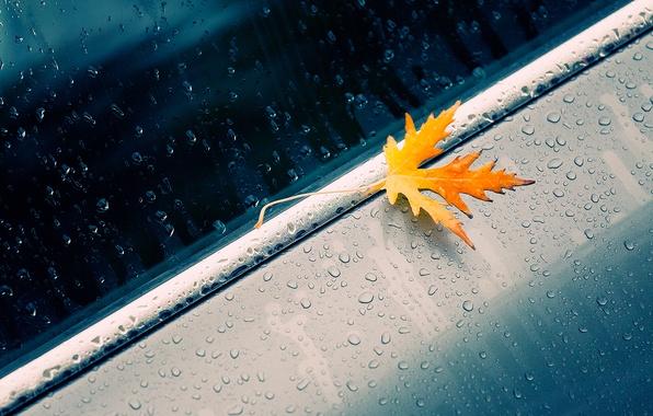 Picture machine, autumn, drops, macro, sheet, yellow