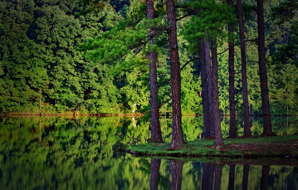 Picture forest, nature, river, ate, the reflection in the water