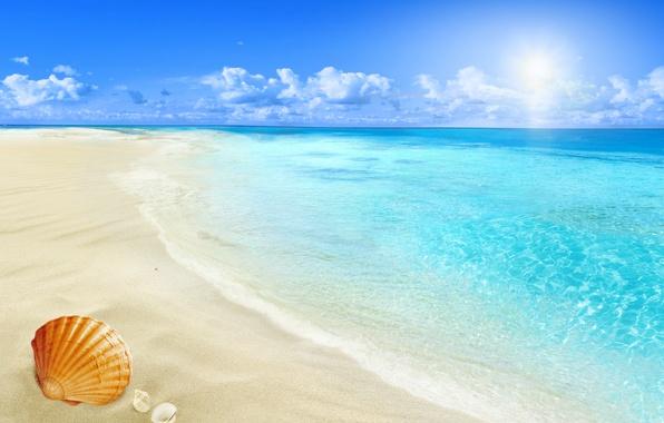 Picture beach, sea, sun, sand, seashell