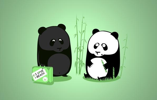 Picture tan, vacation, Panda