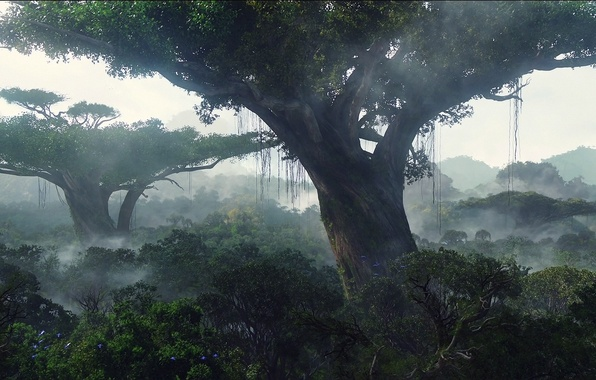Picture forest, trees, landscape, jungle