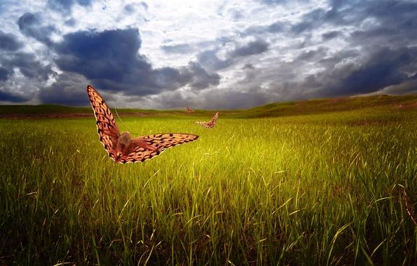 Picture field, the sky, grass, butterfly, clouds, nature, art, Larisa Koshkina